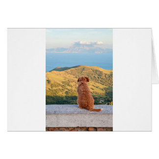 Lonely dog watching on Gibraltar strait Card