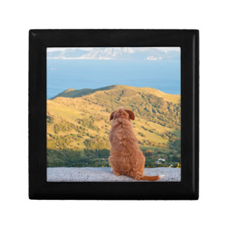 Lonely dog watching on Gibraltar strait Gift Box