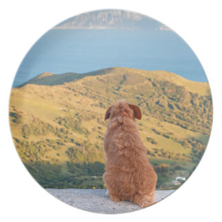 Lonely dog watching on Gibraltar strait Plate