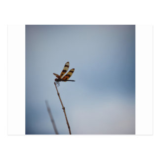 lonely dragonfly postcard