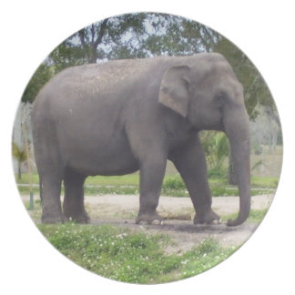 Lonely elephant plate