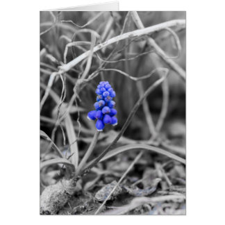 Lonely Grape Hyacinth Select Color Card