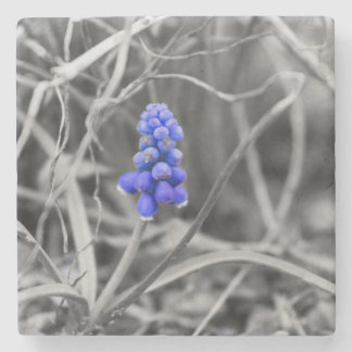 Lonely Grape Hyacinth Select Color Stone Coaster