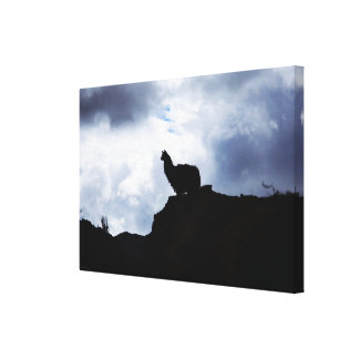 Lonely llama silhouette canvas print