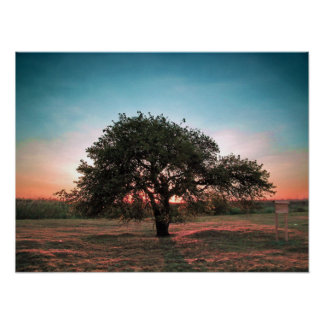 Lonely pear tree print