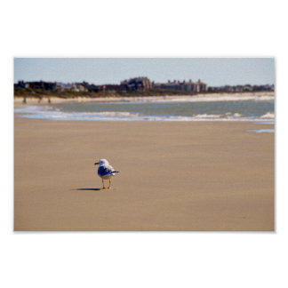 Lonely Seagull on Kiawah Island Beach Poster