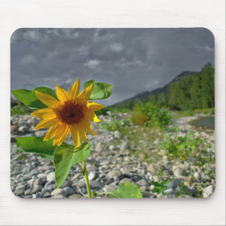 Lonely Sunflower Mouse Pad