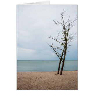 Lonely tree card