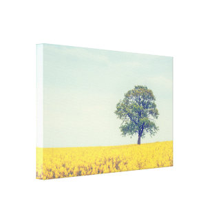 Lonely tree on a canola field canvas print