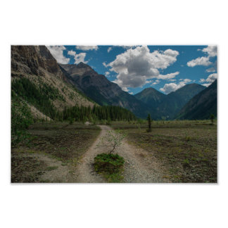 Lonely Tree On Mt. Robson Hike Poster