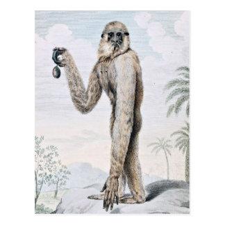 Long Armed Gibbon Ape Art Postcard
