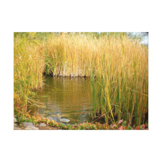Long Grass in a Pond Canvas Print