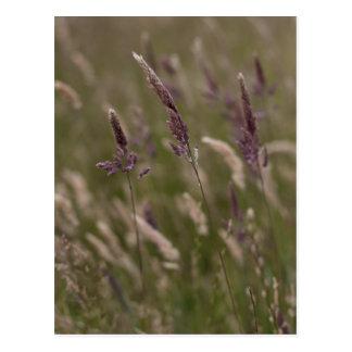 Long Grass Postcard