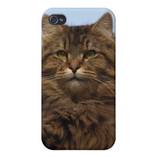 Long-hair Tabby Cat Animal iPhone Case Case For iPhone 4
