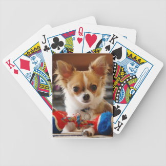 Long Haired Chihuahua Dog Playing Cards