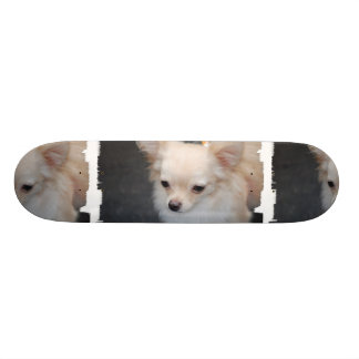Long Haired Chihuahua Skateboard