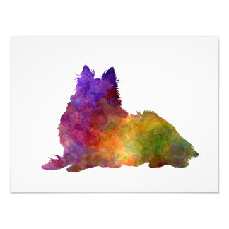 Long Haired Collie in watercolor Photographic Print