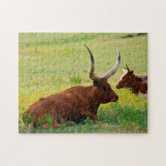 Long Horn Cows  in Oklahoma. Jigsaw Puzzle
