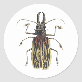 Long-Horned Beetle, Prionus Cervicornis Round Sticker