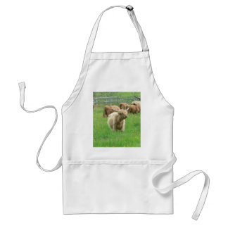 Long Horned Cattle On Field Eating Grass Aprons