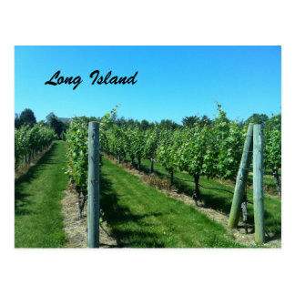 Long Island Vineyard Postcard