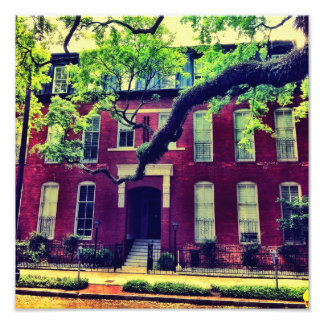 Long Limb In Savannah Photo Print
