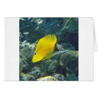 Long Nose Butterfly Fish Greeting Card