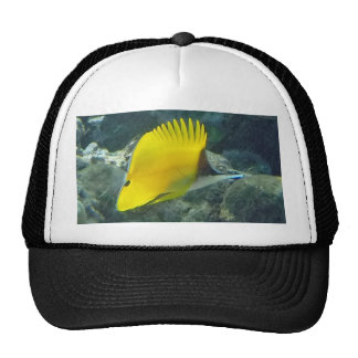 Long Nose Butterfly Fish Trucker Hat