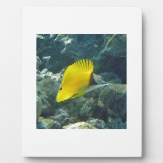 Long Nose Butterfly Fish Plaque