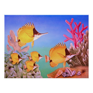 Long-nose Butterfly Fish Poster