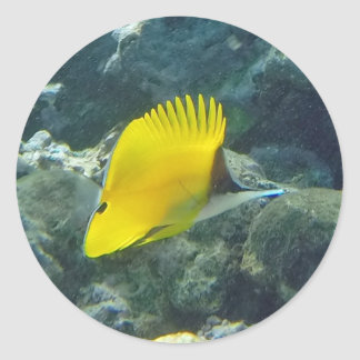 Long Nose Butterfly Fish Round Sticker