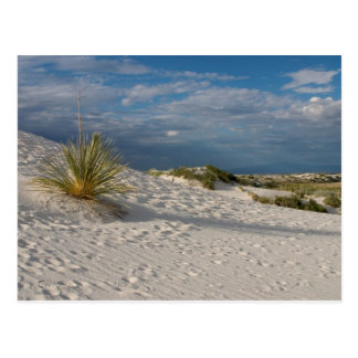 Long Shadow of the Yucca - Postcard