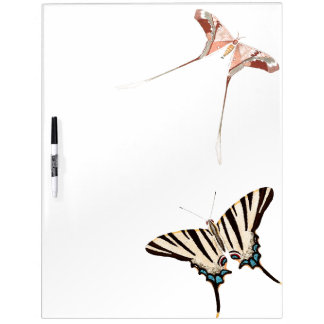 Long Tailed Butterflies Wildlife Dry Erase Board