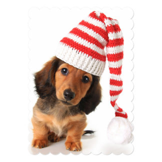 Longhair Dachshund Puppy 13 Cm X 18 Cm Invitation Card
