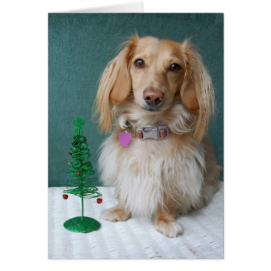 Longhaired dachshund sitting on a wicker table card