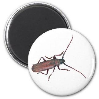 Longhorn Beetle Coordinating Items 6 Cm Round Magnet