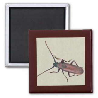 Longhorn Beetle Coordinating Items Square Magnet