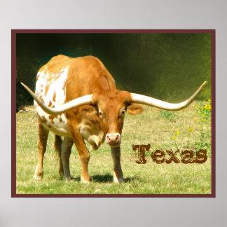 Longhorn Cattle Texas Poster