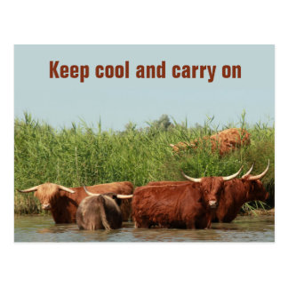 Longhorn cows keeping cool and carrying on postcard