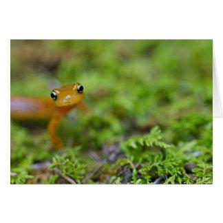 Longtail salamander face card