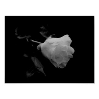 Lonley Rose Poster, Black and White Poster