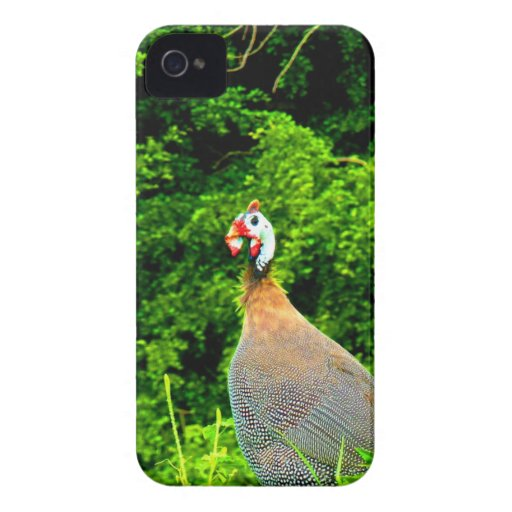 Look forward to love and joy guinea fowl guadeloup Case-Mate iPhone 4 case