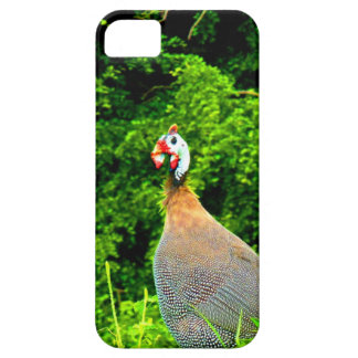 Look forward to love and joy guinea fowl guadeloup iPhone 5 case