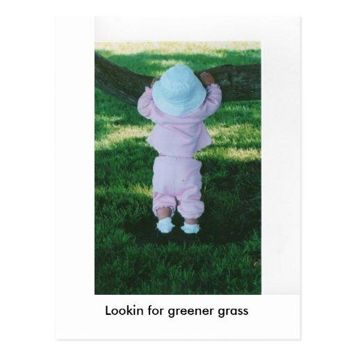 lookin over tree, Lookin for greener grass Postcards