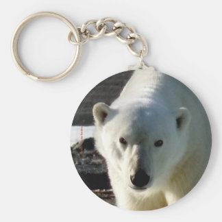 Looking into the eye of a Polar bear Key Ring