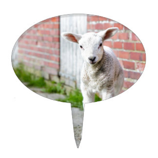 Looking lamb stands near brick wall cake topper