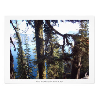 """""""Looking Through the Forest"""" Crater Lake Art Photo"""