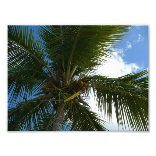 Looking Up to Coconut Palm Photo Print