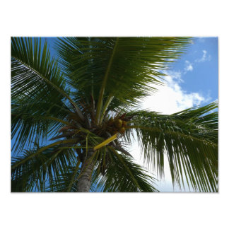 Looking Up to Coconut Palm Tree Tropical Nature Photographic Print