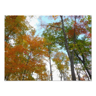 Looking Up to Fall Leaves I Colorful Fall Foliage Photo